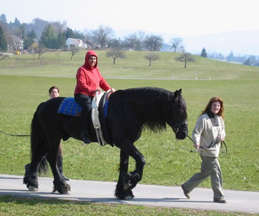Molly riding a Friesian horse